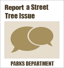 Street Tree Issues
